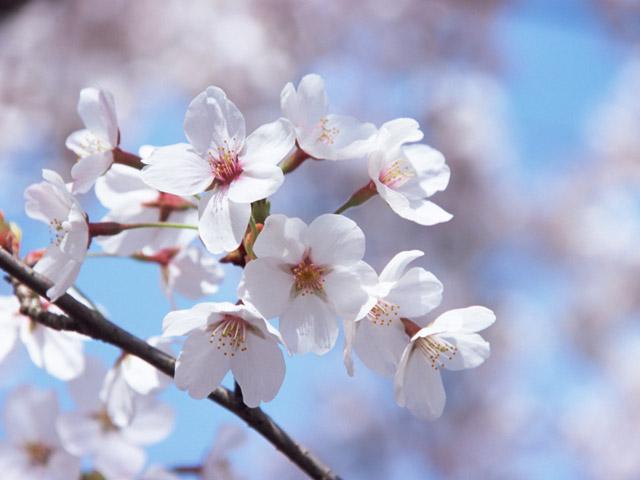 4月1日 今日のネタ|エイプリルフールのルール
